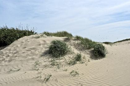 """Dune Breeze"" - photo courtesy of Karen Rennick, Moonflower Photography"